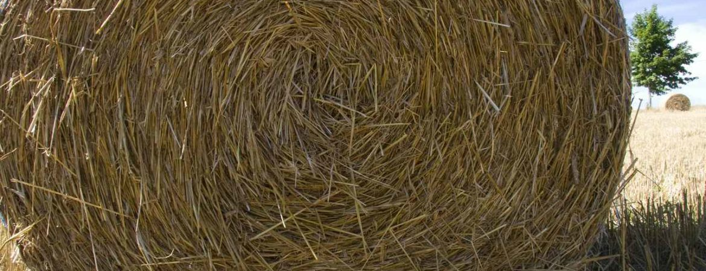 In Augustus tijd om stro en hooi binnen te halen