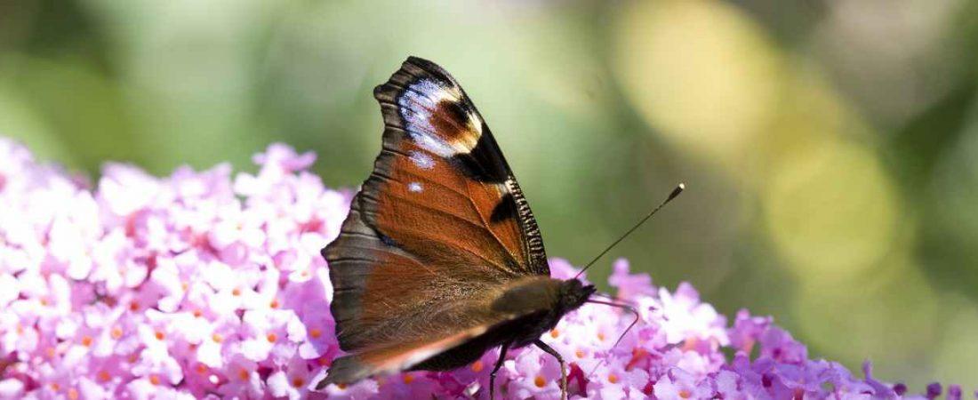 vlinder adembenemend mooi