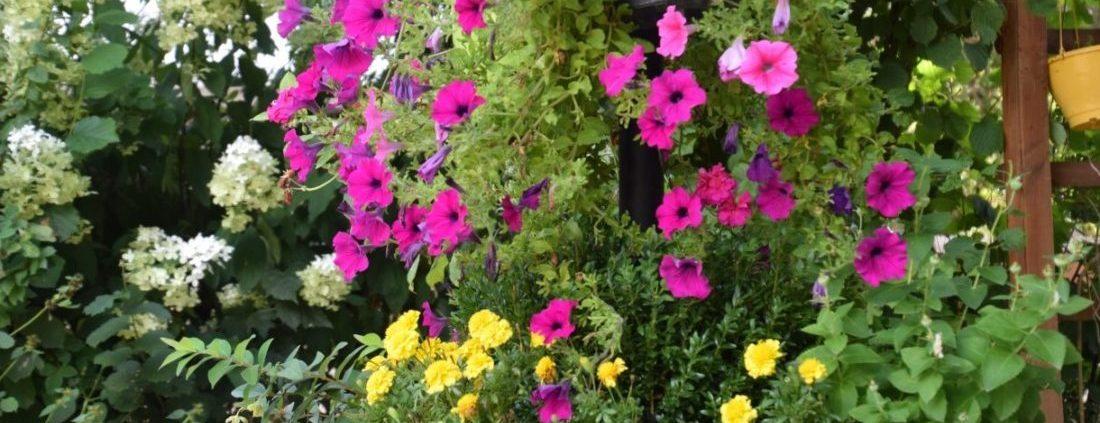 Mooie natuur en veel bloemen bij Camping Chantegril in Frankrijk
